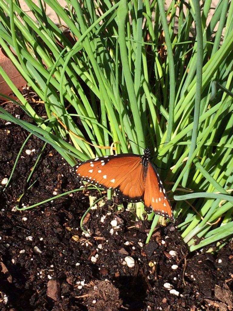 ButterflyFlutterHelenTeague