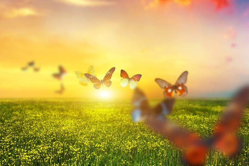 ButterfliesSquared