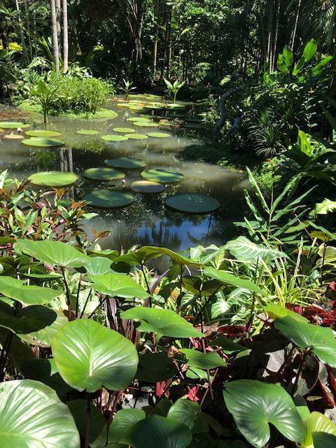 Singapore Botanic Garden Teague